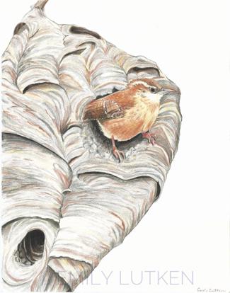 Illustration of a hornets nest with a Carolina Wren